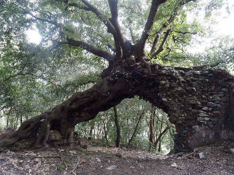 galeria_antica_-_albero_e_muro