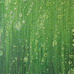 cavi verdi2